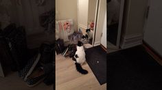 My cat is freaking us out a little. The mirror has been here for years. Is this normal behavior?
