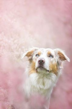 These Stunning Dog Portraits Perfectly Capture Each Pup's Unique Personality