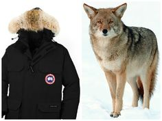 Canada Goose' jacket fur controversy