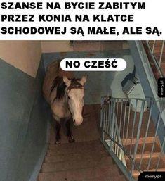 Very Funny Memes, Wtf Funny, Hilarious, Funny Lyrics, Polish Memes, Weekend Humor, Komodo Dragon, Meme Lord, Daily Funny