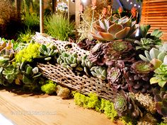 Falling Waters Succulent Container