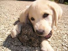 truffle - Google Search
