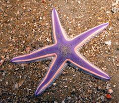 star fish - Google Search