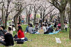 Oravanpesä: JAPANI 2016 osa 2: Hanami Osakassa.