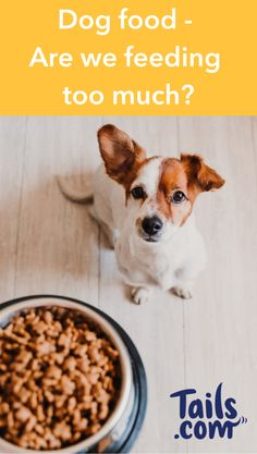 How aware are dog owners of the nutritional needs of their furry companions? While nutrition is key to a long and healthy life for your dog, nearly half of all dog owners don't know what type of dog food or how much to feed their dogs.  Click the pin to read more...   Tails provide tailored dog food to dog lovers and their pooches in the UK.    #DogFood #DogFoodTips #DogNutrition #DogHealth #DogCare DogOwnerTips #UnitedKingdom #UK Dog Nutrition, Nutrition Guide, Cute Dogs, Cute Babies, Animals Beautiful, Cute Animals, Types Of Dog Food, Wild Animals Pictures, Cold Home Remedies