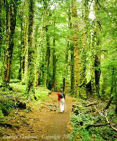 Parque Nacional Huerquehue Chile, Painting, Wonderful Places, National Parks, Countries, Tourism, Fotografia, Chili Powder, Painting Art