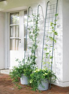 Container Gardening, Gardening Tips, Simple House Design, Moss Garden, Outdoor Spaces, Pergola, Landscaping, Succulents, Yard