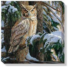F593709430:Snowy Perch-Owl Canvas Art by Millette