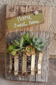 succulent garden on reclaimed barn wood