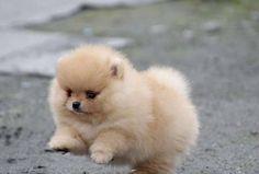 BLOG OBRAZKI: PIESKI Polar Bear, Teddy Bear, Animals, Blog, Pet Dogs, Animales, Animaux, Blogging, Animal