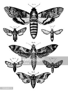 Illustration : Collection of moths