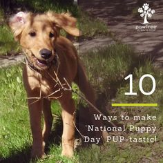 10 Super Fun Activities to Make 'National Puppy Day' PUP-tastic!