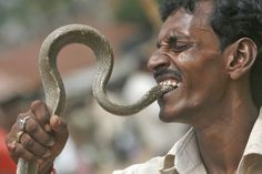 Sajal Biswas, 40, a snake charmer puts the head of a snake into his mouth as he performs at a roadside to earn his livelihood on the outskirts of Agartala, capital of India's northeastern state of Tripura.