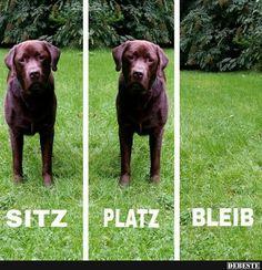 Sitz / Platz / Bleib.. | Lustige Bilder, Sprüche, Witze, echt lustig