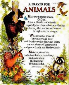 st francis prayer for animals Saint Francis Prayer, St Francis, Dog Quotes, Animal Quotes, Animal Pics, Beautiful Creatures, Animals Beautiful, Dog Love, Puppy Love