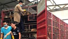 Peter Egan ‏@PeterEgan6   Please read and share this. Activism against the dog meat trade is growing throughout China. These groups need...