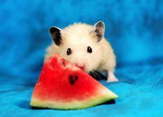 Mufinek & Watermelon by pyza*, via Flickrg