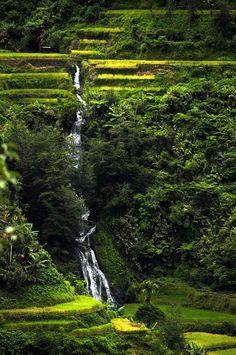 Cascade au milieu des rizières Bohol, Cebu, Les Philippines, Diving, Nature, Waterfall, Photos, Travel, Outdoor