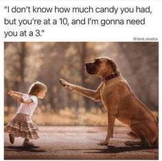 The best, funniest Halloween memes of Our favorite Halloween memes that truly capture every Halloween lover's spirit. halloween memes 20 Funny Halloween Memes Only True Halloween Fans Will Appreciate Animals And Pets, Funny Animals, Cute Animals, Funniest Animals, Kids Animals, Memes Humor, Funny Memes, Funniest Memes, Most Famous Memes