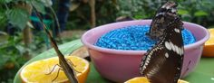 Check out Sertoma Butterfly House & Marine Cove on Roadtrippers