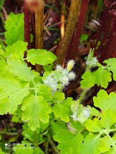Herbs, Plants, Food, Compost, Goal, Essen, Herb, Meals, Plant