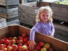 Photo.applepicking.5