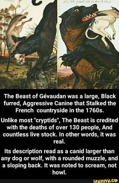 Its description read as a canid larger than any dog or wolf, with a rounded muzzle, and a sloping back. It was noted to scream, not howl. Scary Creepy Stories, Creepy Facts, Wtf Fun Facts, Mythological Monsters, Mythological Creatures, Paranormal Stories, Horror Stories, Magical Creatures, Fantasy Creatures