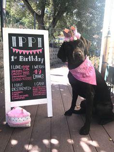 Content filed under the Dog Toys taxonomy. Dog First Birthday, Puppy Birthday Parties, Puppy Party, Birthday Diy, Birthday Cake, Dog Toys Amazon, Hot Dog Bar, Gotcha Day, Akira