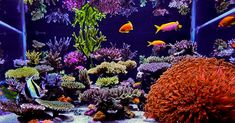 Nicholas Le's (stonecold) 180 US-gallon reef aquarium as featured on Reefkeeping Magazine.