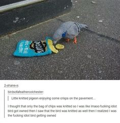 And finally, the person who thought a pigeon was dumb.