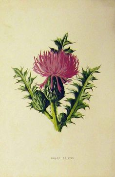 ...brave enough to pick a thistle for his sweetheart. I like the prickle concept. Warts and all tat
