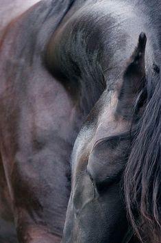 Equine. #stylemyride StyleMyRide.net