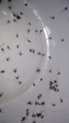 9. Use a bowl lightly coated with oil to swat at mosquito with: