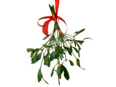 The tradition of kissing under the mistletoe (or holly)