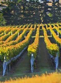 Pond Paddock Vineyard - New Zealand Vineyard For Sale