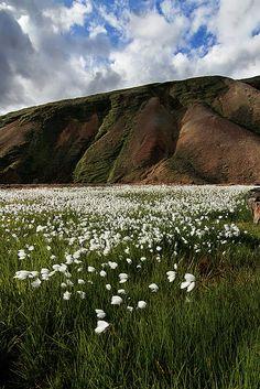 Iceland.  Goodbye Landmannalaugar'  Photo by pas le matin, via Flickr.  Photo taken on July 31, 2009.