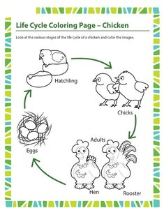 Science Coloring Pages Pdf Best Of Life Cycle Coloring Page Chicken Worksheet Grade sod Free Preschool, Preschool Printables, Preschool Learning, Teaching, Online Coloring Pages, Animal Coloring Pages, Science Worksheets, Worksheets For Kids, Chicken Coloring Pages