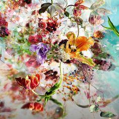Elusive Treasures - Isabelle Menin - pictures, photography, photo art online at LUMAS