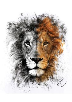 Couch Pillows 410672059775199737 - Lion Face Unisex Tank Top by monolyn – Black – MEDIUM – Unisex Tank Top Source by laetitiaalberti Phone Wallpaper Images, Lion Wallpaper, Cool Wallpapers For Phones, Animal Wallpaper, Phone Wallpapers, Screen Wallpaper, Wallpaper Quotes, Lion Images, Lion Pictures