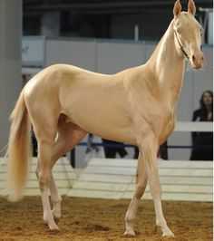 Um cavalo que parece ter saído de um conto de fadas, e que foi eleito o mais bonito do mundo