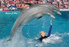 Discover Oceans of Fun at ZOOMARINE in Guia. Located just a few kilometers from Albufeira in the central Algrave, ZooMarine is a full day of fun for the entire family.