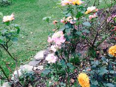 roses and dhalia