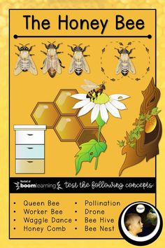 A quiz to test knowledge about Honey Bees covering concepts such as: Queen Bee Worker Bee Drone Honey Comb Pollination Waggle Dance Bee Hive Bee Nest materials materials materials learning be Elementary Science, Teaching Science, Science Education, Honey Bees, Drone Bee, Bee Activities, Science Resources, Teaching Resources