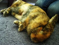 Hoomins wait for bunny to wake and give next commands - June 26, 2012