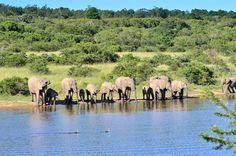 Lalibela Game Reserve and Safari Lodge, Addo Elephant Park, Eastern Cape, South… Elephant Park, Game Reserve, Tree Tops, Lodges, Safari, Cape, Hotels, Africa, Mantle