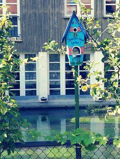 kasvi, aurinko, makea, kukka, ikkuna, kaupunki, Koti, joki, koriste, vihreä, pieni, syksy, takapiha