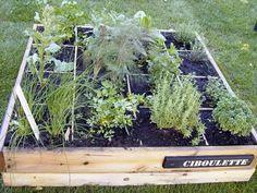 Aujourd'hui, retour sur mon objectif Nicolas le Jardinier: Et voila, avant de se lancer pour de bon, mes petites recherches sur le net et dans quelques bouquins de jardinage… Et oui, pas de questions de planter à l'arrache au risque que mon petit potager...