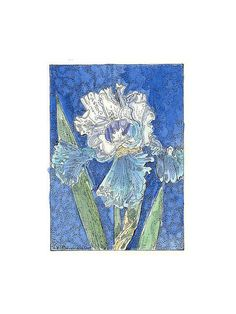 Blue and White IRIS ACEO from Theodora Signed by THEODORADESIGNS, $7.00