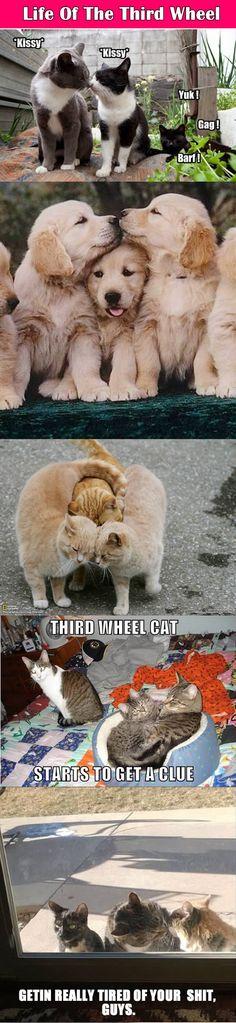 Life Of The Third Wheel.
