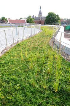 Green roof at Hamilne University